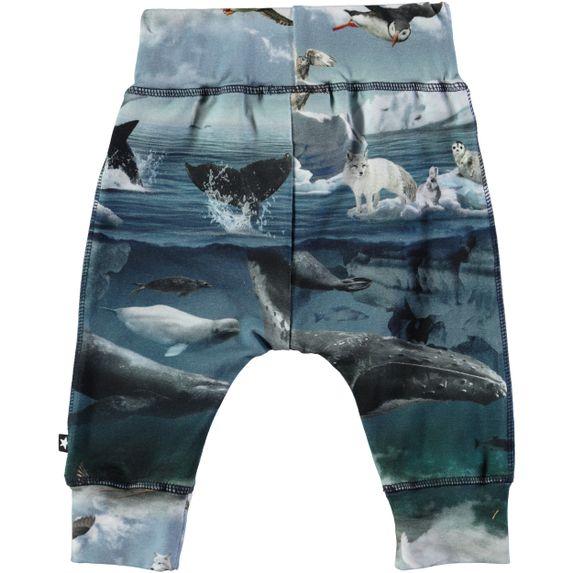 Спортивные брюки Molo Sammy Arctic Landscape, арт. 3W18I224.4746, цвет Синий