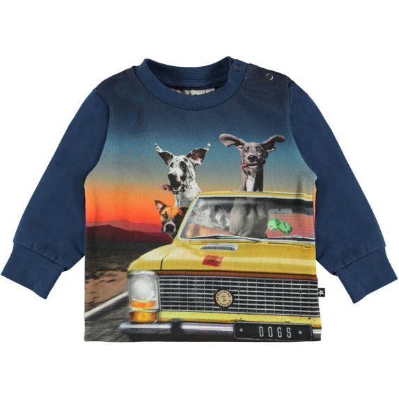 Реглан Molo Eloy Canine Cruising, арт. 3S20A403.7126, цвет Синий